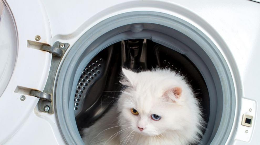 Наистина имат девет живота: Жена изпра котката си в пералня