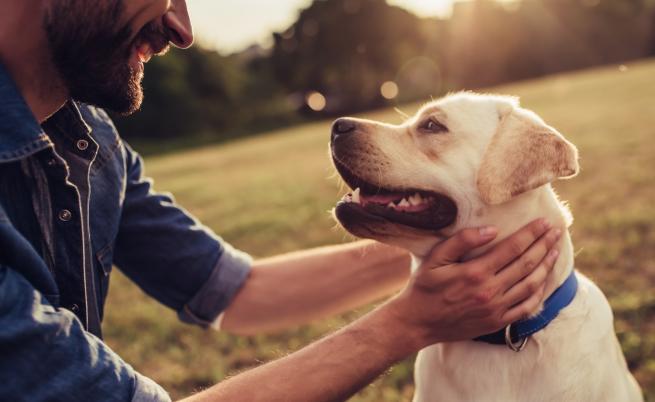 Изборът на куче е труден като любовта. Ето защо