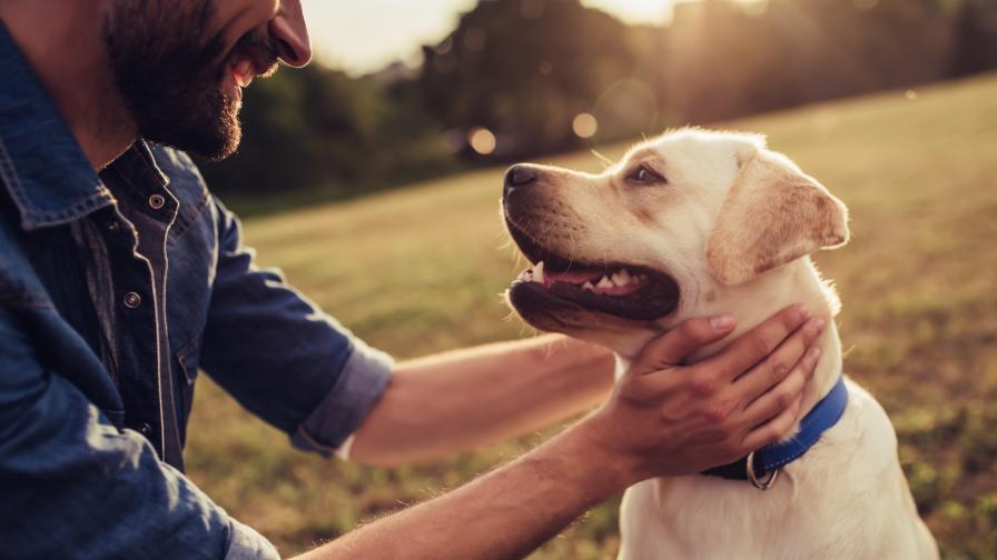 <p>Изборът на куче е <strong>труден като любовта</strong>. Ето защо</p>