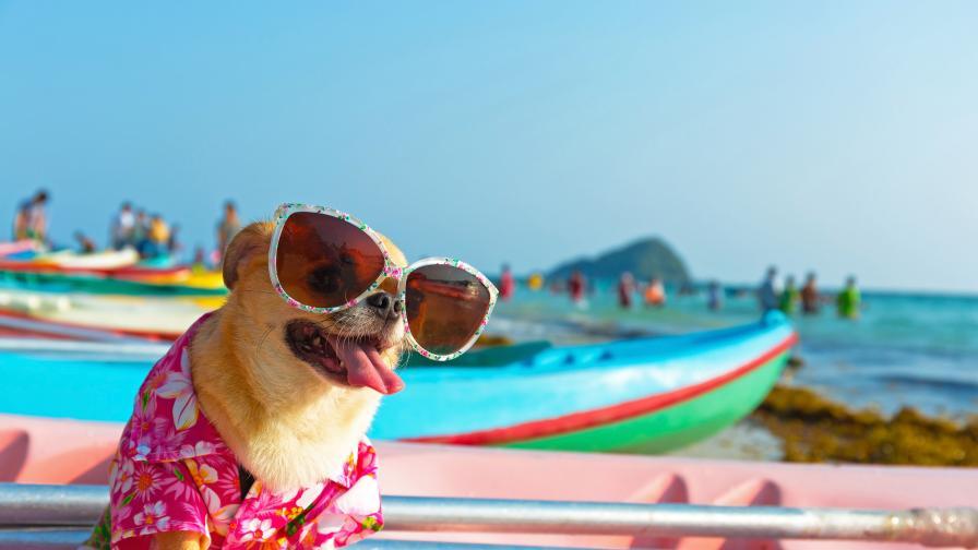 <p>Тези породи кучета <strong>понасят най-добре жегите</strong></p>