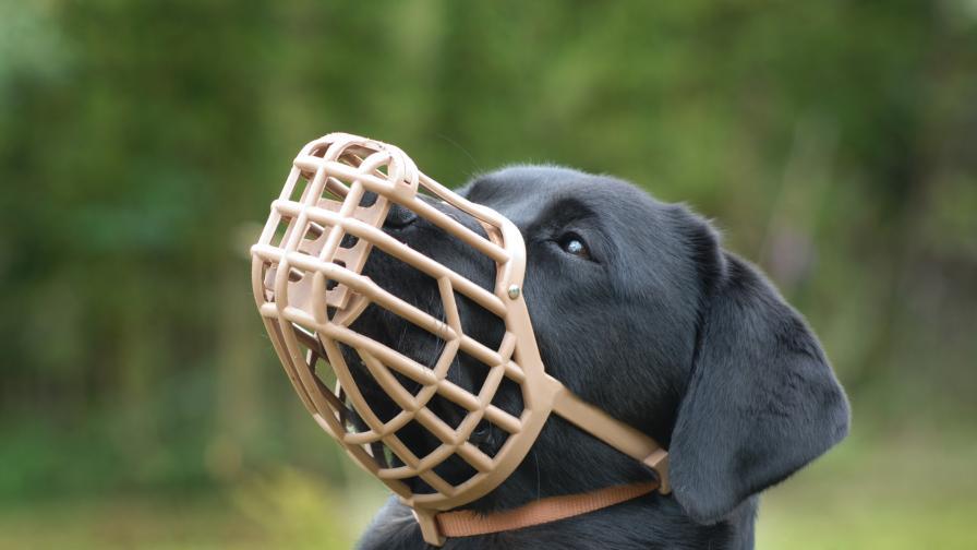 <p>Забраниха разхождането на кучета без повод и намордник&nbsp; &nbsp;&nbsp;</p>