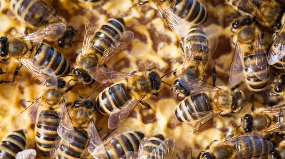 Мъж оставя 60 000 пчели да покрият лицето му...