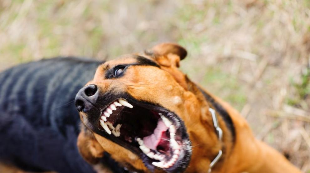 Как да реагираме при нападение от куче (ВИДЕО)