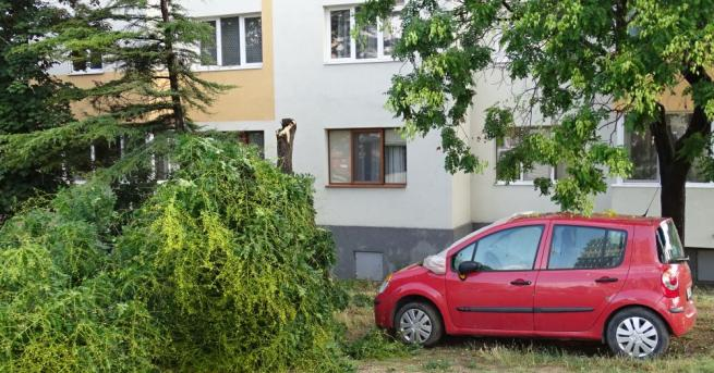 Бурята, придружена от пороен дъжд в Благоевград пречупи и изкорени