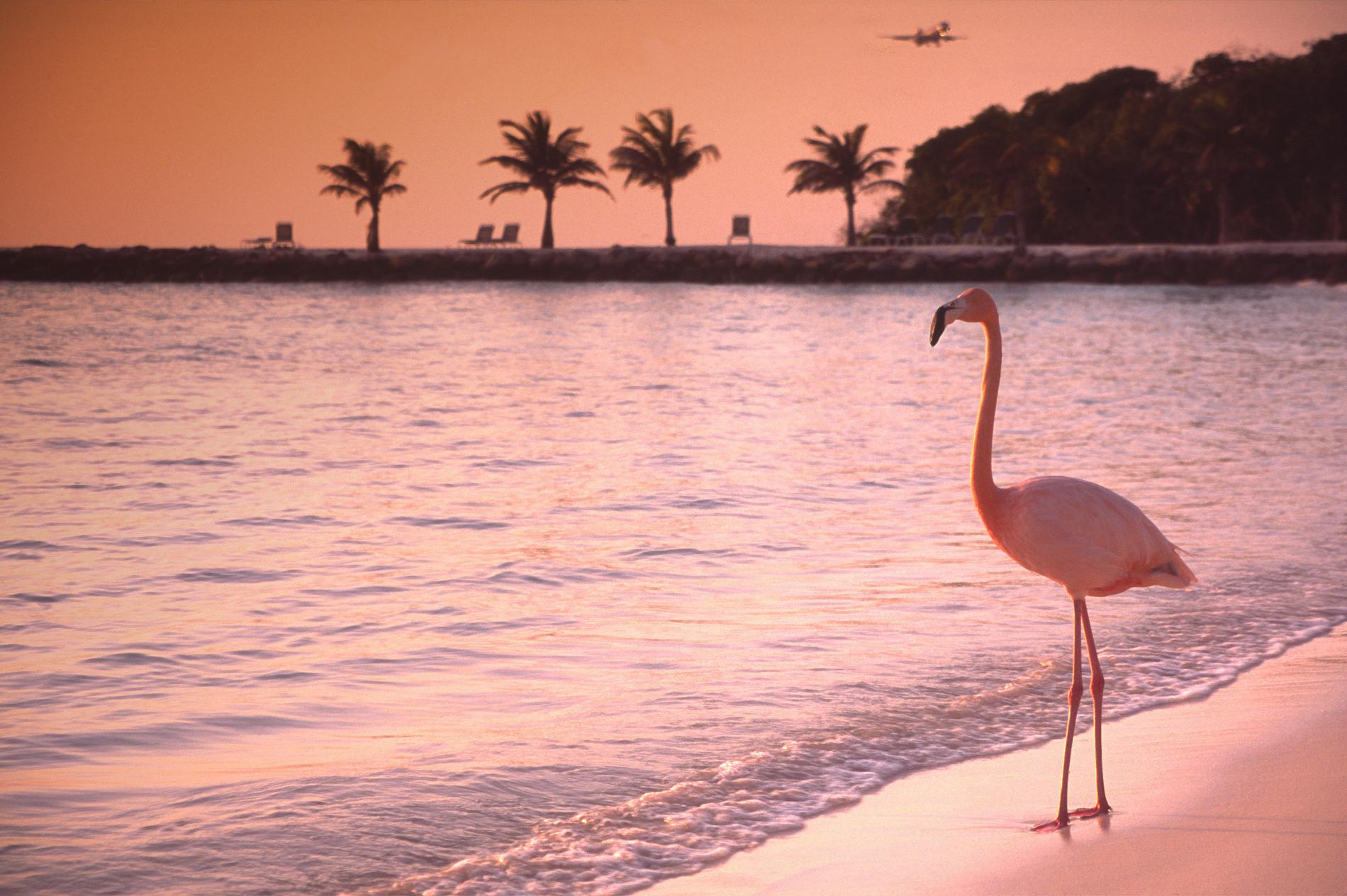 <p>Африканско фламинго успява да избяга от зоологическа&nbsp;градина в Канзас. Осем години по-късно птицата е намерена&nbsp;на хиляда километра &ndash; в Мексиканския залив. Фламингото дори си намерило и другар. Служител от зоопарка обаче казва, че е щастлив, че птицата се чувства добре сред природата и се отказва да я връща обратно в САЩ.</p>