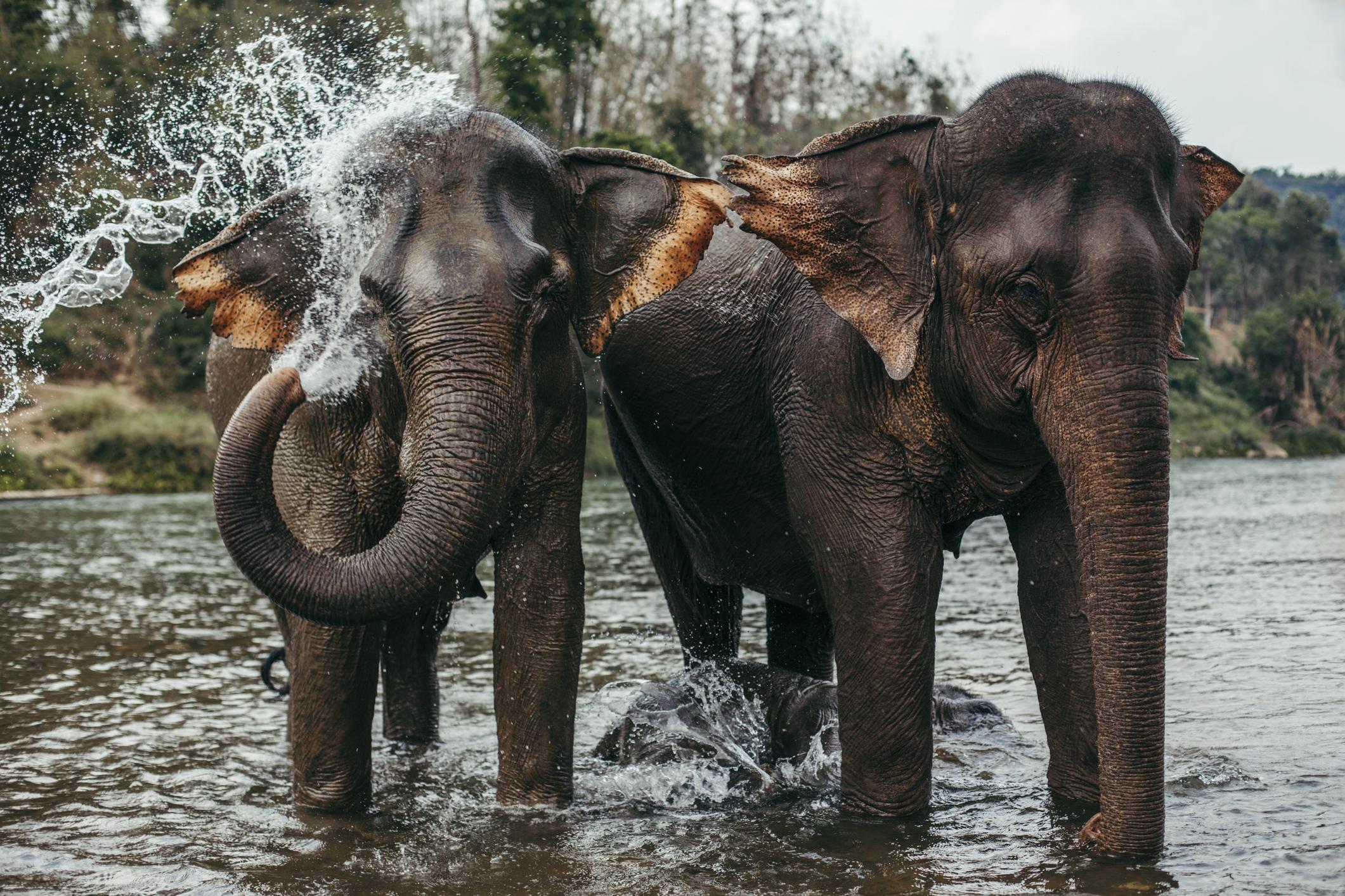 <p>През 2018 г. жители&nbsp;на град в щата Ню Йорк забелязват как слон се разхожда по улиците. Медиите тогава съобщават, че слонът&nbsp;е избягал&nbsp;от резерват за диви животни, а след залавянето му, властие го връщат обратно в резервата.&nbsp;</p>