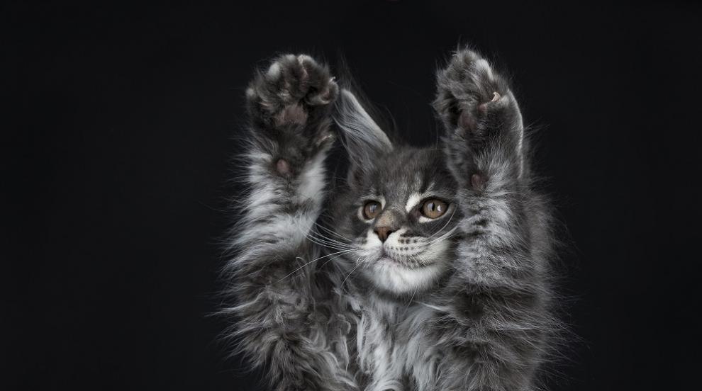 Какво подлудява домашните котки