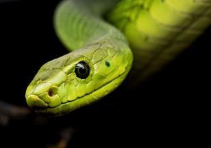 Днес отбелязваме Световния ден на змията