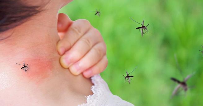 Западнонилска треска, пренасяна от обикновените комари, е голямата опасност за