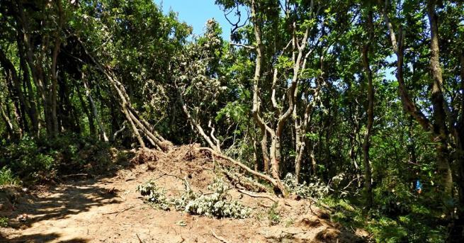 Снимка: Глобяват горските в Царево за нерегламентирани дейности в местността