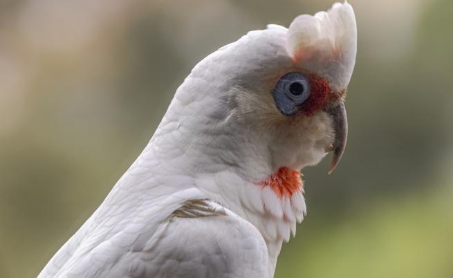 Намериха десетки мъртви птици, кървящи от очите