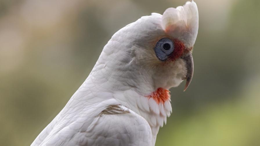 <p>Намериха десетки мъртви птици, кървящи от очите</p>