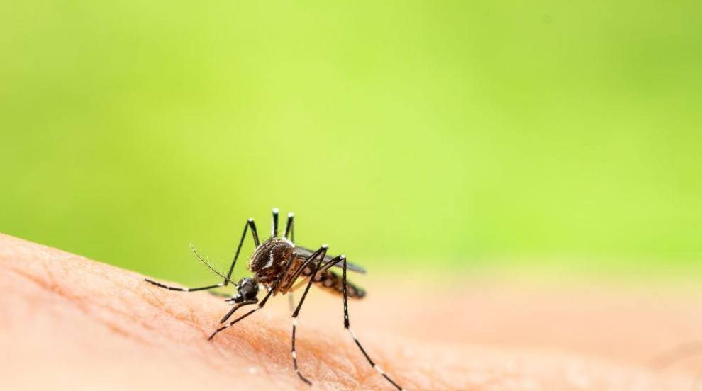 СЗО призова да се инвестират средства за нова ваксина срещу малария