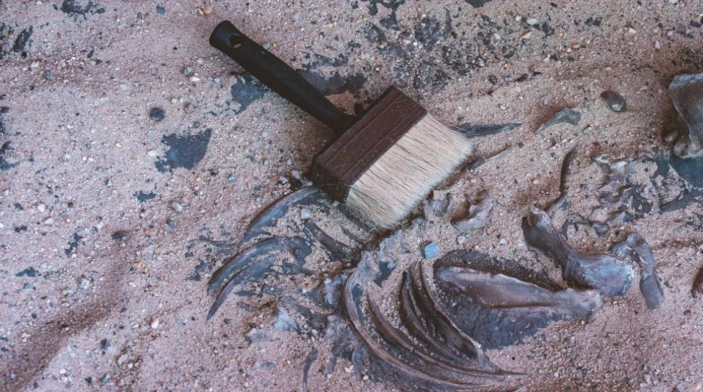 Учени откриха череп на арктически еднорог