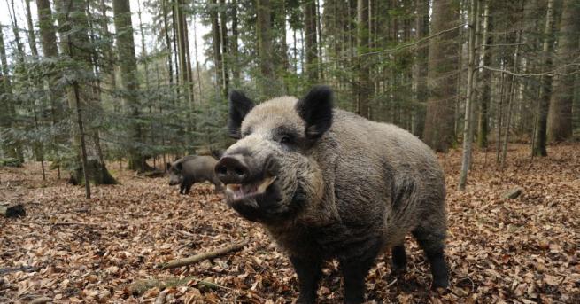 В Плевенско се забранява достъпът в горски територии след нов