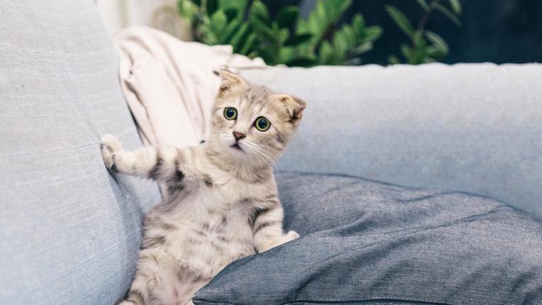 10 неща, които би казала котката ти, ако можеше да говори