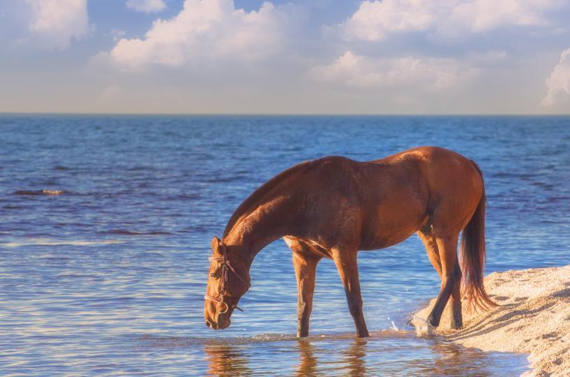<p>Пий вода там, където пият конете. Конят няма да близне лоша вода.</p>