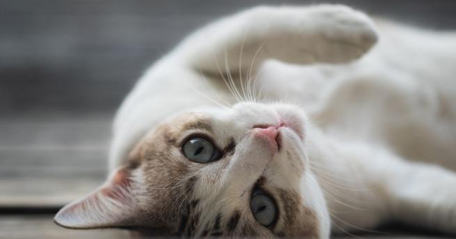 Дори като се има предвид броят на животите, които котките
