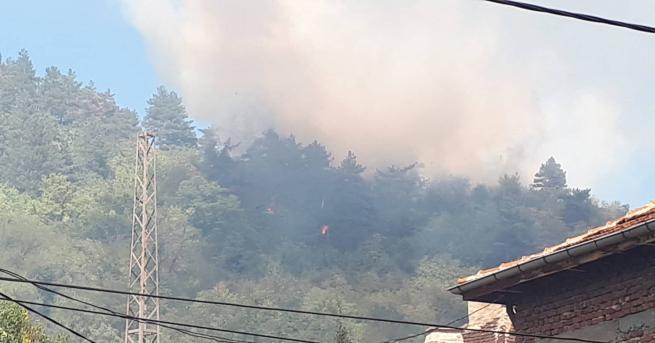 Два пожара гасят в момента противопожарни коли в Дупница. Иглолистна