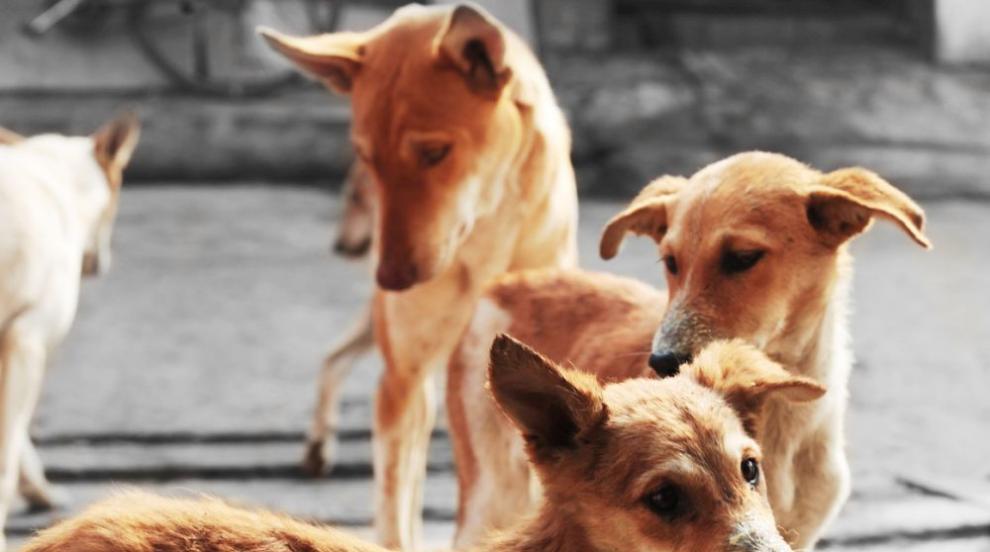 Защо някои кучета са по-агресивни от други