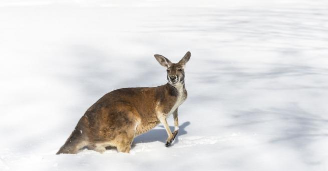 В югоизточните райони на Австралия падна сняг, което е рядко