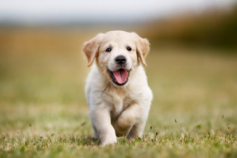 <h3>10. Когато се облягат на нас</h3>  <p>Понякога кучето се обляга на стопанина си, защото се чувства обезпокоено и иска закрила от стопанина си. В други случаи обаче това е искрена проява на любов, загриженост и уважение. Правило ли ви е впечатление как, когато се нараните, чувствате болки или просто сте болни, домашния любимец ляга точно на мястото, което ви боли. Добри лекари и психолози са.</p>