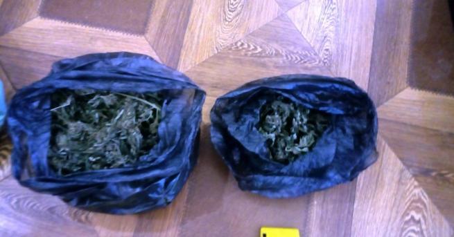 Ракитовски полицаи откриха и неутрализираха действаща наркооранжерия в Костандово, съобщават