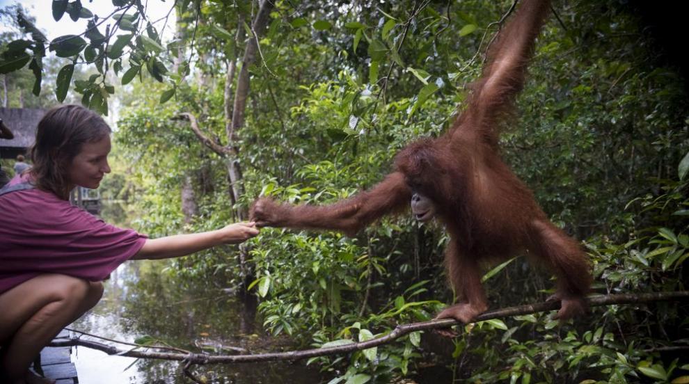 Как дивите животни използват човека?