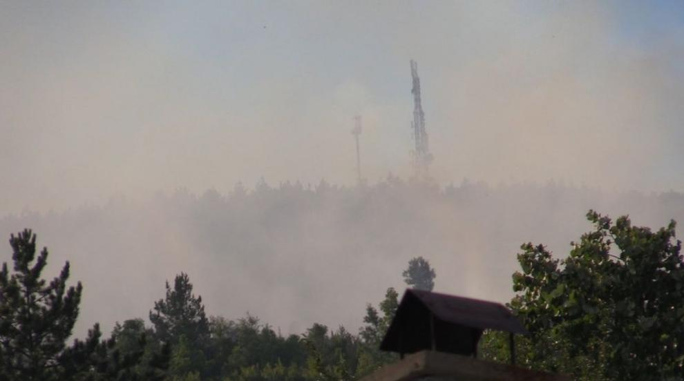 Гората над Реброво отново е в пламъци