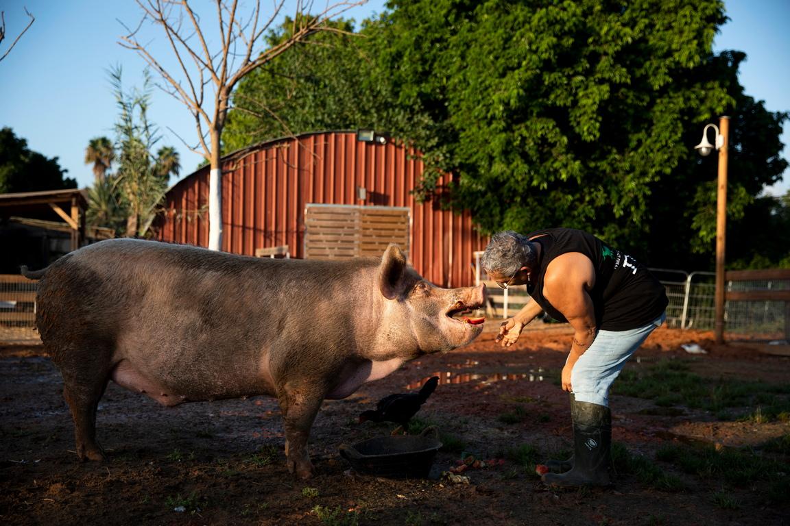 <p>Фермата на свободата се намира в Мошав Олеш, близо до Нетания, централен Израел.</p>