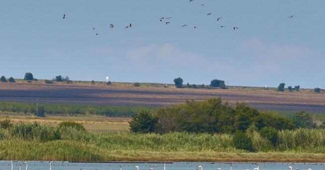 Ято от 159 птици от вида розово фламинго е наблюдавано