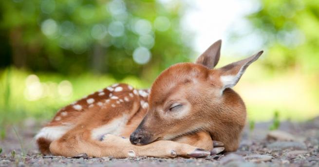 Новородено еленче, което било изоставено от майка си в зоопарк