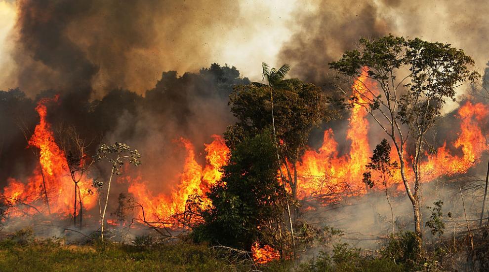 В бразилска Амазония бушуват най-големите пожари от...