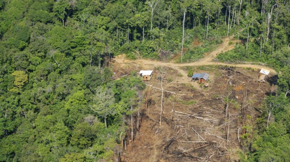 Бразилското племе се бори за джунглата в Амазонка (СНИМКИ/ВИДЕО)