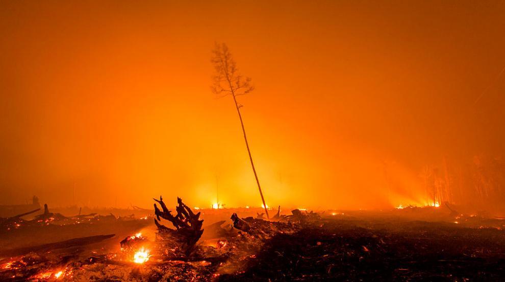 Стотици арести в Индонезия заради горските пожари