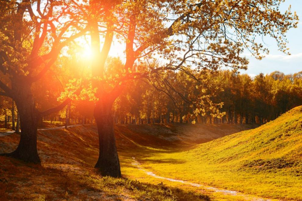 времето есен поляна дъвета