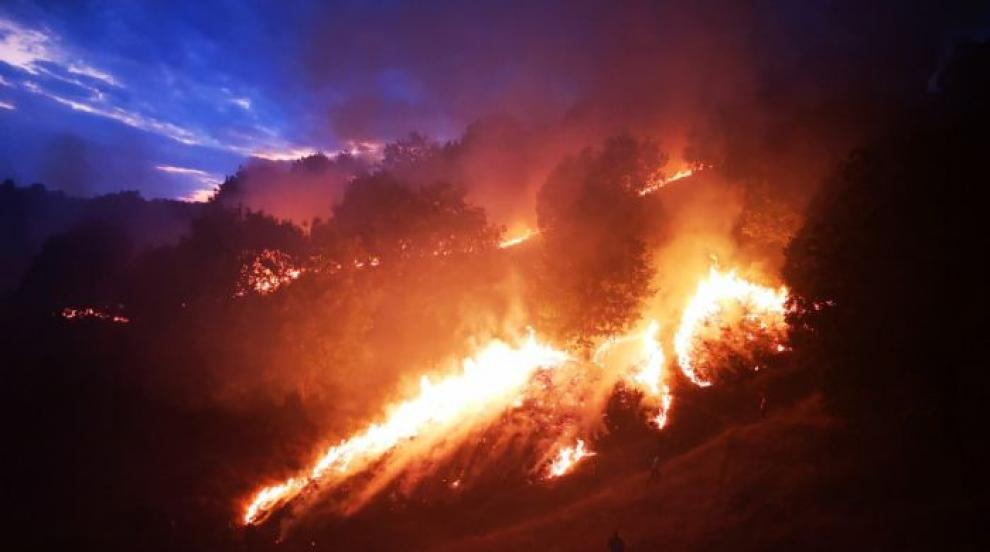 Пожар в иглолистна гора бушува близо до село Стояново