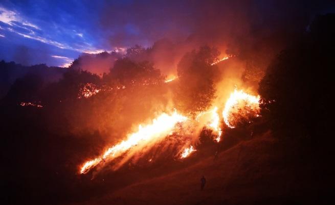 Пожарът край Петрич