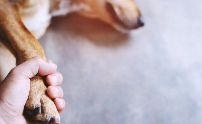Мистериозна болест отне живота на огромен брой кучета в Норвегия