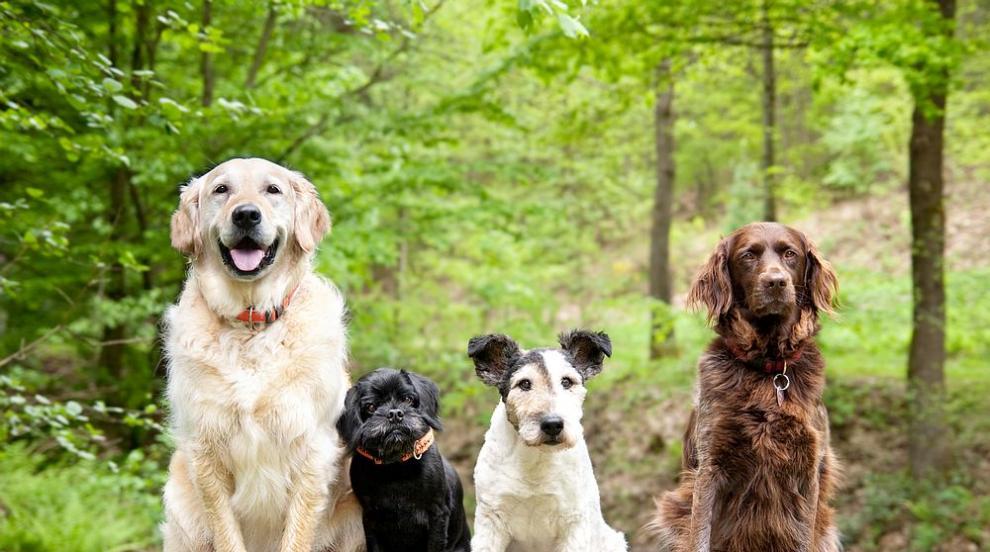 Известни личности и техните още по-известни кучета