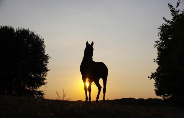 Благороден кон