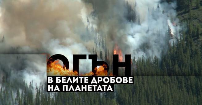 В много райони на планетата бушуват апокалиптични пожари в мащаби,
