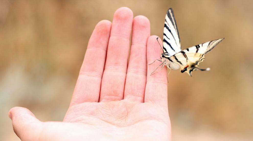 В Турция откриха пеперуда от ледниковата епоха (СНИМКИ)