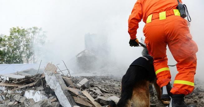 Спасители откриха живо куче под руините на сграда, рухнала при