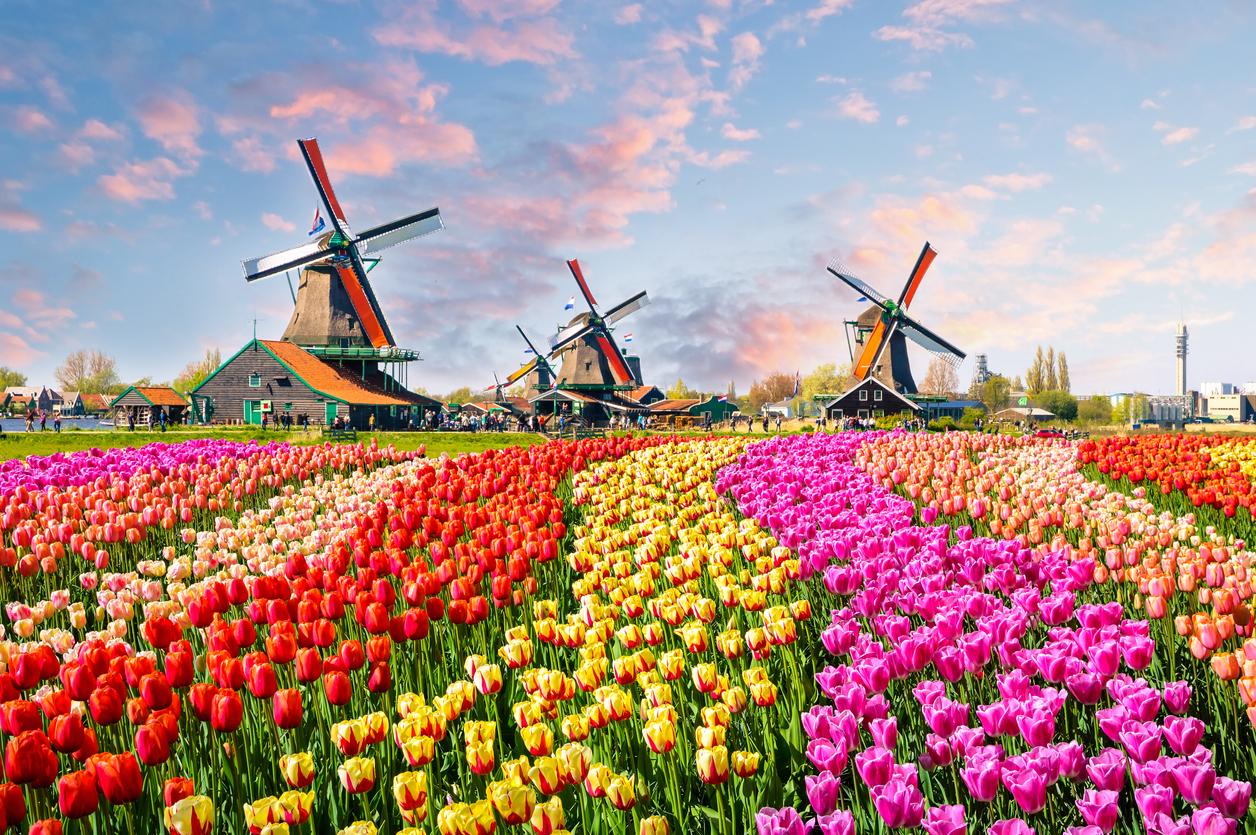 <p>Приказните градини с лалета са нещо, за което си струва да посетите Нидерландия</p>