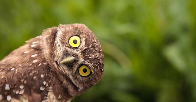 Българското дружество за защита на птиците (БДЗП) организира творческа работилница