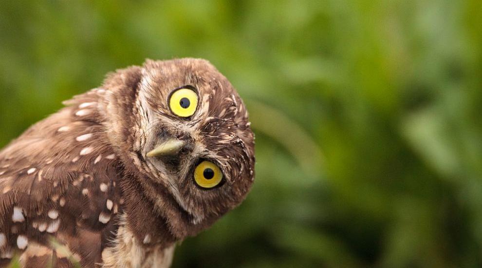 Европейски дни на птиците в Пловдив