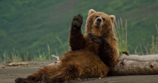 Природен парк в Аляска прави гласуване, което през годините е
