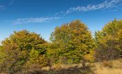 Проектът за гората на Црънча е готов