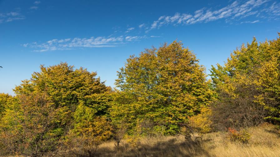 Обсъждат готовият проект за гората на Црънча